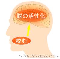咬む→脳の活性化