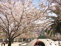 桜そのⅡ2